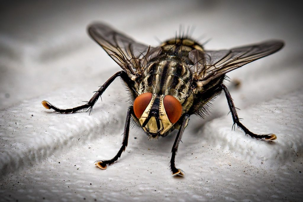 fly and pest control service